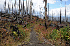 Nine-Mile Trailhead on Yellowstone Lake , Yellowstone National Park