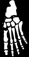 Skeleton Foot
