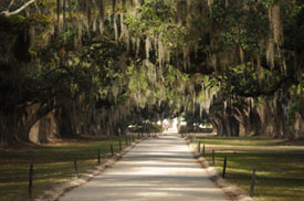 South Carolina Plantation