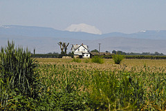 Mt. Hood looms above a Yakima farm