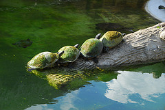 Tall Ted's Turtles